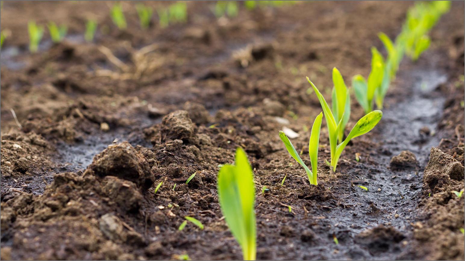 Plant Seeding